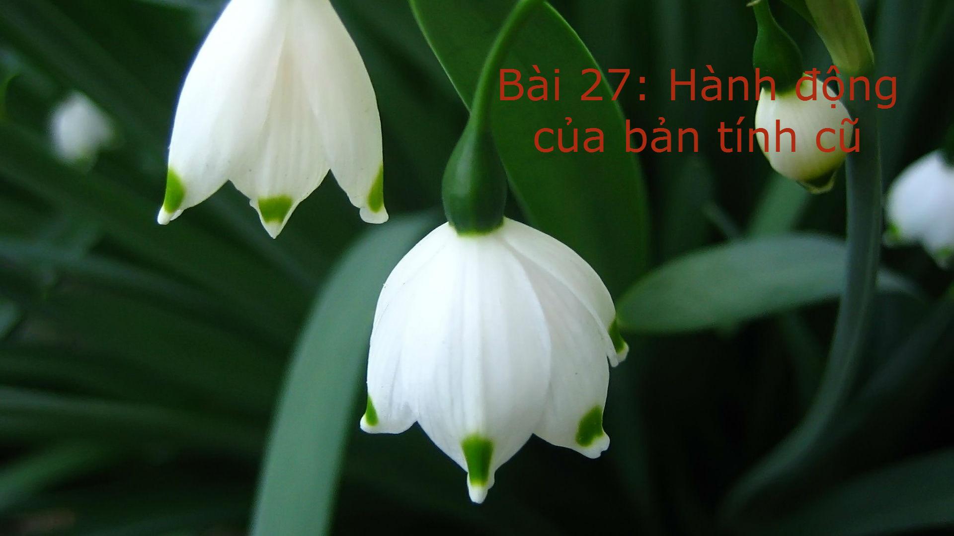 Bai 27